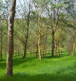 nuove piantagioni forestali di Casa Lucii
