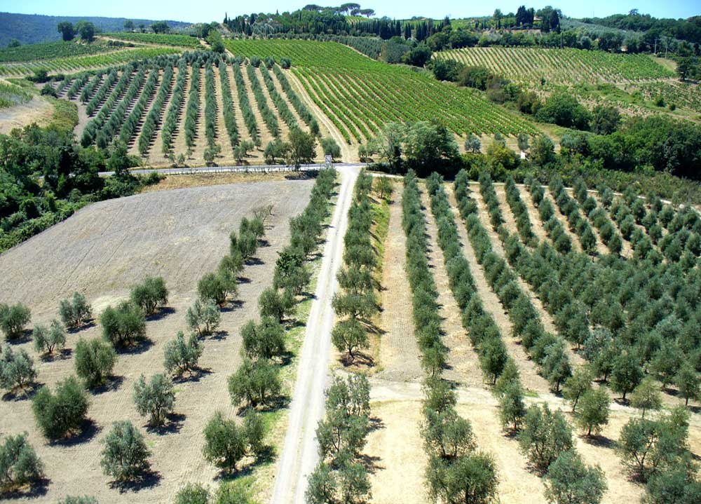 Olivenbaumpflanzung im Podere Prete Nero
