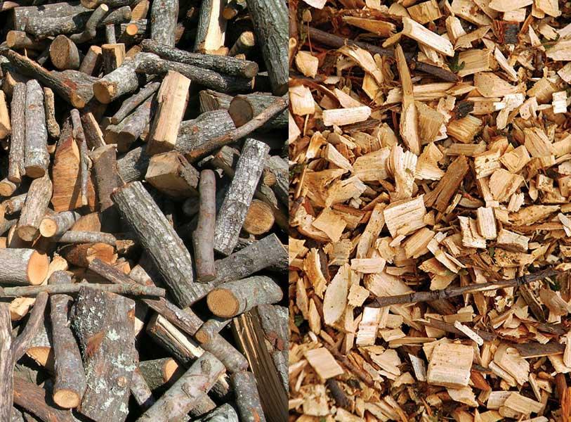 prodotti del bosco