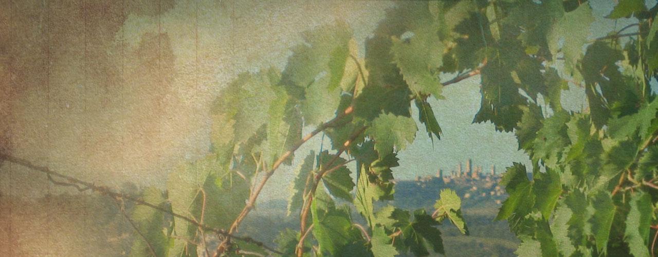 Vigneti e territorio paesaggio d\'arte...
